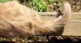 LOGO - Sunnys tail