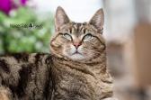 LOGO Final Cat 1