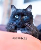 JOJO 2 black cat