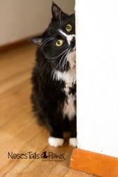 JOJO 3 black cat
