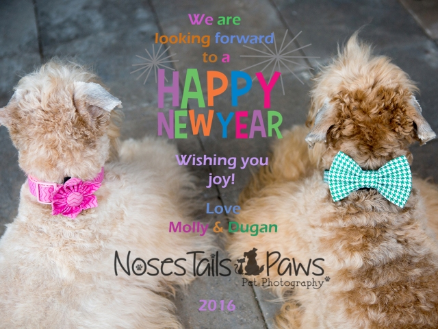 2016 HAPPY NEW YEAR MOLLY AND DUGAN for NTP