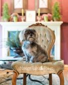 1 - Bella on chair