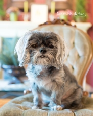 2 - Bella on chair