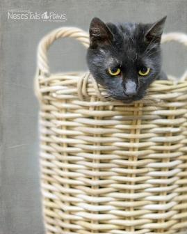 CAT 10 GRAY