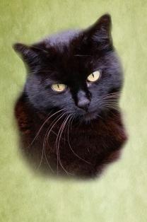 CAT - Coco Head Shot
