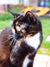 CAT - Hedwig Headshot