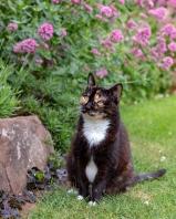 CAT - Hedwig in Garden 1