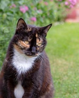 CAT - Hedwig in Garden 2