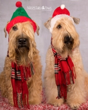 MOLLY AND DUGAN - Santa Hats TOgether October 2019