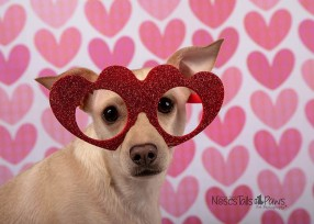 ZIGGY - Heart glasses 1 with logo